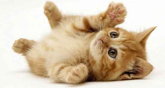تعبیر خواب گربه ، در مغازه و گربه مرده در خواب و گربه مریض و مدفوع در اتاق