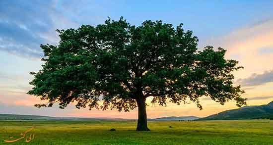 تعبیر خواب درخت ، به ابن سیرن و درختکاری گردو از حضرت یوسف و سپیدار
