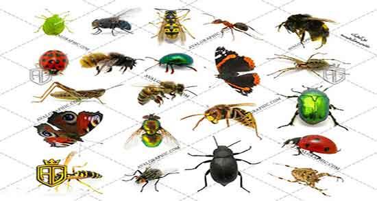 تعبیر خواب حشره ، زیر پوست و در موی سر و دیدن حشرات زیاد ابن سیرین در برنج