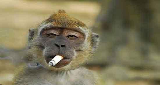 تعبیر خواب میمون ، های زیاد در قفس و میمون سیاه و قهوه ای کوچک حضرت یوسف