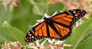 تعبیر خواب پروانه ، امام صادق و حضرت یوسف و پروانه های سفید و سیاه رنگی بزرگ