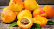 تعبیر خواب زردآلو ، در بارداری روی درخت حضرت یوسف و زردآلو قرمز و خشک چیست
