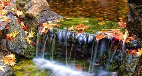 تعبیر خواب آب روان ، و زلال رودخانه امام صادق با فشار و قدم زدن در آب و سرسبزی