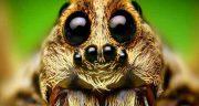 تعبیر خواب عنکبوت حضرت یوسف ، تار عنکبوت زرد و سفید و سیاه و بزرگ امام صادق