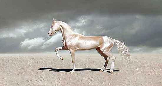 تعبیر خواب اسب ، قهوه ای داشتن و سفید امام حسین و ترسیدن زایمان نوازش اسب