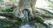 تعبیر خواب چشمه ، آب در کوه جوشان و بالای کوه و زلال در خانه ابن سیرین در باغ