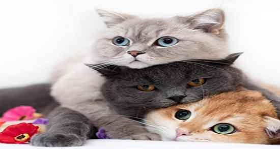 تعبیر خواب گربه مرده ، دیدن لاشه گربه در خانه و لاشه گربه سیاه حضرت یوسف