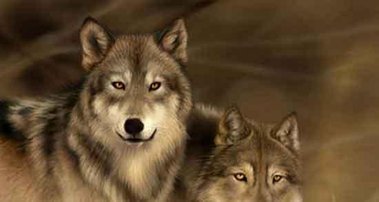 تعبیر خواب گرگ یوسف نبی ، فرار از گرگ خاکستری و گاو و شغال سفید و توله گرگ