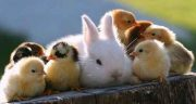 تعبیر خواب حرف زدن با حیوانات ، با سگ و گربه و اسب و حیوانات اهلی و عجیب و غریب