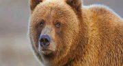 تعبیر خواب خرس حضرت یوسف ، قهوه ای امام صادق و خرس پاندا و بچه خرس قهوه ای