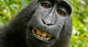 تعبیر خواب میمون حضرت یوسف ، میمون های سیاه و زیاد و قهوه ای کوچک در خانه