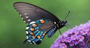 تعبیر خواب پروانه امام صادق ، پرواز پروانه های سفید و رنگی بزرگ و زرد و سیاه رنگ