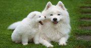 تعبیر خواب سگ سفید ، اهلی کوچک پشمالو ابن سیرین و توله سگ سفید