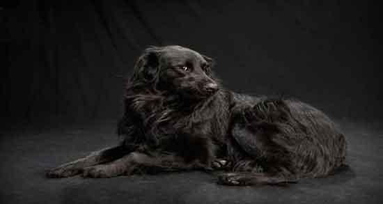 تعبیر خواب سگ سیاه ، حضرت یوسف و سگ سیاه و سفید خانگی بزرگ مهربان