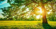 تعبیر خواب تابستان ، دیدن میوه و فصل و بخاری و سرما و زمستان در تابستان چیست