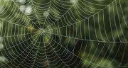 تعبیر خواب تار عنکبوت ، حضرت یوسف روی صورت و از بین بردن تار عنکبوت بزرگ