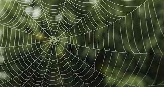 تعبیر خواب تار عنکبوت ، حضرت یوسف روی صورت . از بین بردن تار عنکبوت بزرگ
