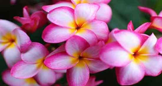 تعبیر خواب یاسمین ، معنی دیدن گل و اسم یاسمین در خواب چیست