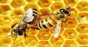 تعبیر خواب زنبور ، نیش زدن زنبور عسل و عسل زرد و ملکه و ریختن عسل در خواب