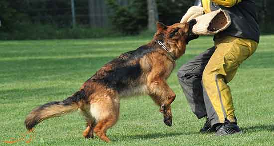 تعبیر خواب سگ دنبالت باشه ، و سگ قهوه ای روشن و دویدن و فرار کردن