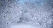 تعبیر خواب برف یونگ ، و رانندگی در جاده برفی و تعبیر خواب برف از دید روانشناسی