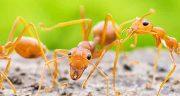 تعبیر خواب دیدن مورچه در موی سر ، حضرت یوسف پیامبر و امام جعفر صادق
