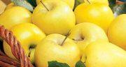 تعبیر خواب سیب زرد برای زن باردار ، کیا تو بارداری خواب سیب دیدن