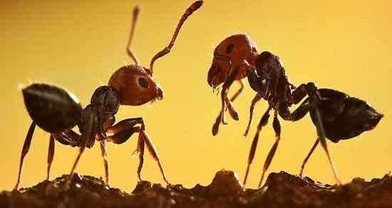 تعبیر خواب مورچه در اسلام ، و حضرت یوسف پیامبر و امام جعفر صادق - فال و خواب