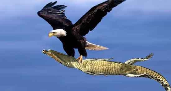 تعبیر خواب عقاب که حمله می کند ، و حمله عقاب سیاه و سفید و قهوه ای به انسان