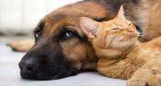 تعبیر خواب سگ و گربه با هم در خانه ، و مردن گربه در خانه نشانه چیست