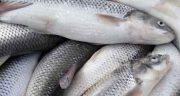 تعبیر خواب ماهی خریدن ، و افتادن ماهی از آسمان و گرفتن ماهی بزرگ از رودخانه