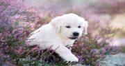 تعبیر خواب توله سگ سفید ، تازه به دنیا آمده ابن سیرین و توله سگ سیاه و سفید و زرد