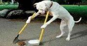 تعبیر خواب مدفوع سگ ، سیاه و سفید و قهوه ای و کرم سفید در مدفوع انسان