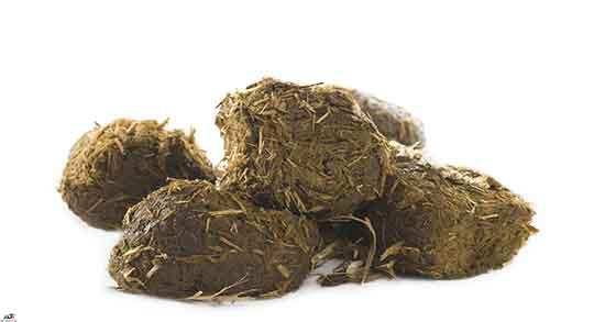 تعبیر خواب مدفوع گوسفندی ، و خوردن مدفوع خودت و شستن مدفوع
