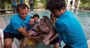 تعبیر خواب بچه فیل ، اهلی و دیدن خرطوم و زایمان و حمله و فرار فیل