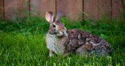 تعبیر خواب خرگوش از حضرت یوسف ، خاکستری و سیاه و سفید و بزرگ و کوچک