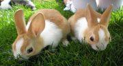 تعبیر خواب خرگوش زخمی ، از حضرت یوسف و گاز گرفتن و زایمان خرگوش سیاه و سفید