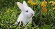 تعبیر خواب خرگوش سفید ، بزرگ و کوچک و زخمی در خواب چیست