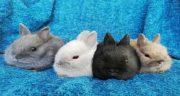 تعبیر خواب غذا دادن به خرگوش ، و مار و زایمان و تبدیل شدن انسان به خرگوش