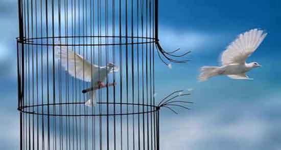 تعبیر خواب پرواز پرنده از قفس ، معنی رهایی پرنده از قفس در خواب چیست