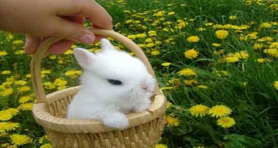 تعبیر خواب کشتن خرگوش ، سفید و سیاه و شکار و کشتن و کشته شدن خرگوش