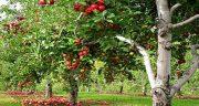 تعبیر خواب درختان میوه ، معنی دیدن درختان میوه در خواب چیست