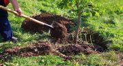 تعبیر خواب درخت کاشتن ، و نهال کوچک گردو و سرو و بید و انگور و کاشتن گل