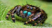 تعبیر خواب دیدن عنکبوت ، بزرگ و کوچک و قرمز و سیاه و زرد و سفید در خواب