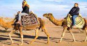 تعبیر خواب شتر سواری ابن سیرین ، و گاز گرفتن شتر از دید حضرت یوسف چیست