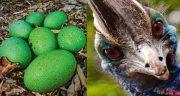 تعبیر خواب شتر مرغ سبز ، معنی دیدن شتر مرغ به رنگ سبز در خواب چیست