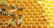 تعبیر خواب عسل و کندو ، معنی دیدن عسل و کندو و موم در خواب چیست