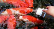 تعبیر خواب غذا دادن به ماهی ، های دریا و رودخانه در خواب چیست