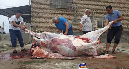 تعبیر خواب قربانی گاو ، سر بریدن گاو و خون قربانی کردن گاو در خواب چیست