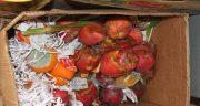 تعبیر خواب میوه گندیده ، و دیدن میوه خراب در خواب و له شده و کپک زده